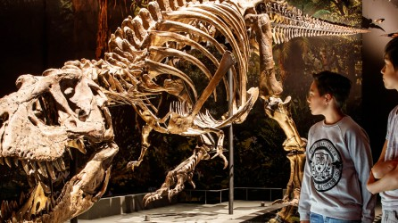 Naturalis t rex Header 1