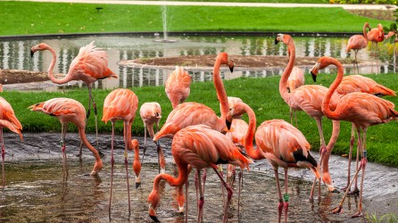 Zoo Antwerpen Flamingo Header